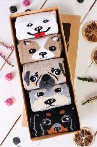 PUPPY gift box containing 5 pairs of socks | BestSockDrawer.com